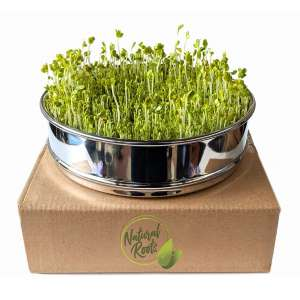 Natural Roots Seed Sprouting Tray 8 Inches
