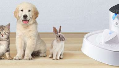 image feature Pet Water Fountains