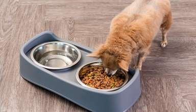 image feature Elevated Dog Bowls