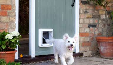 image feature Pet Doors