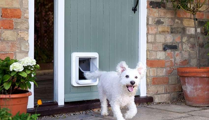 image feature Pet Doors