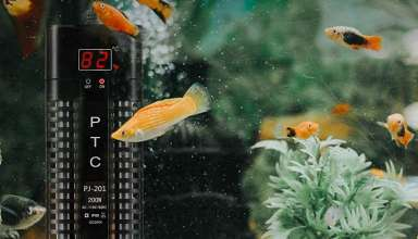 image feature Fish Tank Heaters