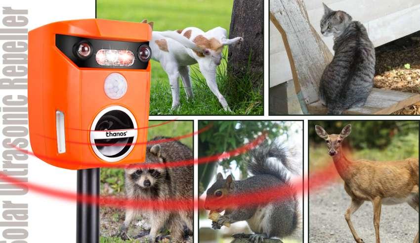 Solar-Powered Animal Repeller